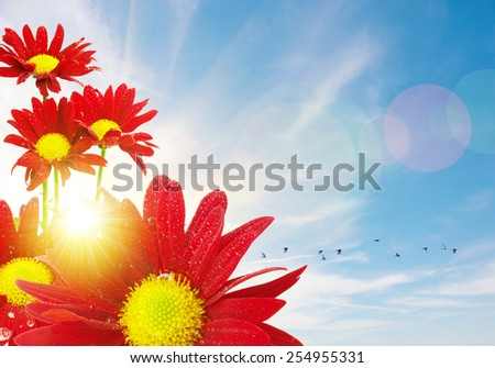 Red flowers and flock of birds under a bright warm sunny sky - stock photo