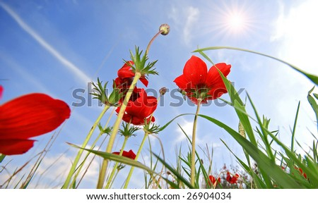 red flowers and sunny sky - stock photo