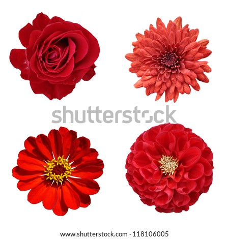 red flowers collage - stock photo