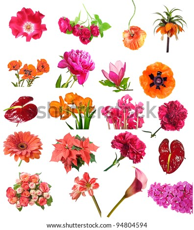 red flowers collection - stock photo