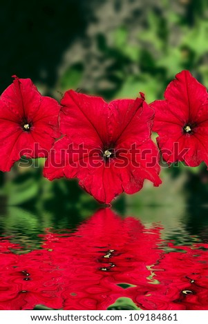 Red flowers design.With copy-space - stock photo