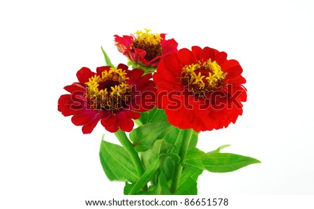 stock-photo-red-flowers-helenium-autumna