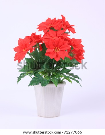 Red flowers in plastic pot on white background