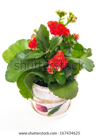 red flowers in vase, isolated on white - stock photo