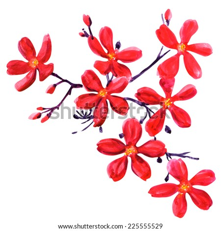 Red flowers isolated on white - stock photo