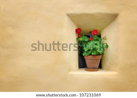 Red flowers next to a yellow wall - stock photo
