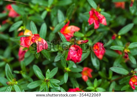 Red flowers on a green tree. - stock photo