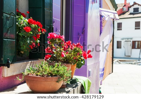 Red flowers on the window. Colorful houses in Burano island near Venice, Italy - stock photo
