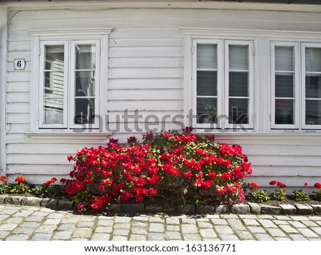 Red flowers outside a white wooden house in Norway,   - stock photo