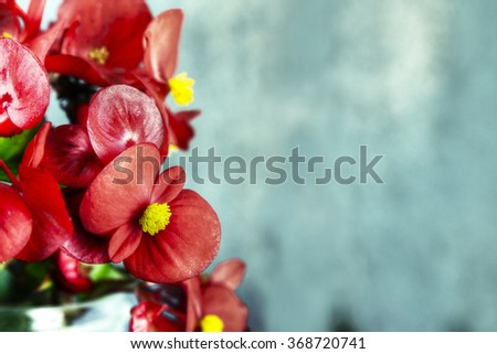 Red flowers over barn wood, cool tones - stock photo