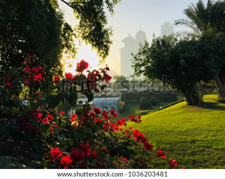 stock-photo-red-flowers-under-a-lovely-s