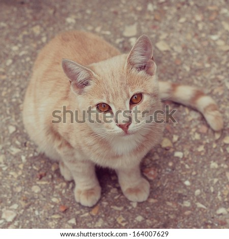 red fluffy cat - stock photo