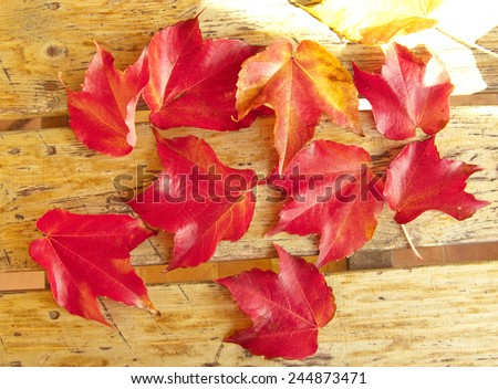 Red foliage of maple leaves, in autumn - stock photo