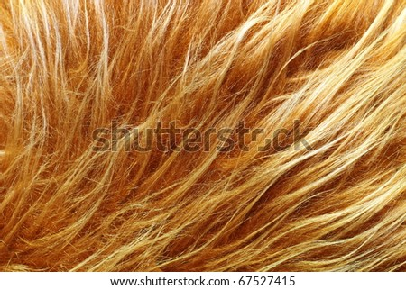 Red fox fur background texture - stock photo