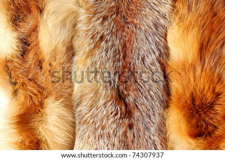 Red fox fur with pied beautiful hairs - stock photo