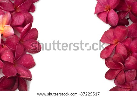 Red frangipani flowers left and right frame isolated white background - stock photo