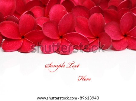 Red Frangipani Plumeria flower - stock photo