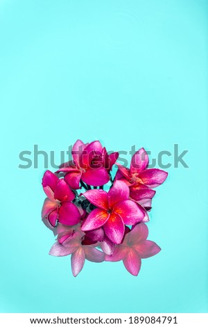 Red frangipani Plumeria  flowers over shiny water background-2 - stock photo