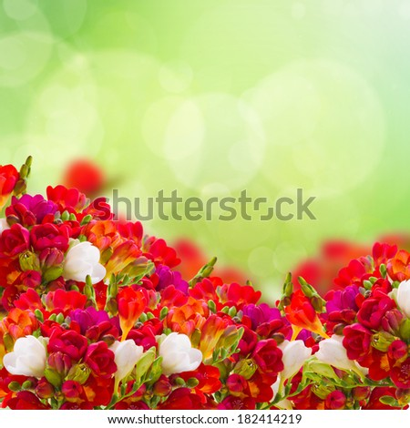red freesia flowers in garden on green bokeh  background