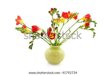 Red Freesias flowers in vase isolated over white background