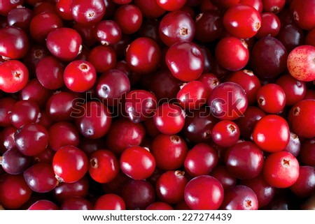 Red fresh cranberries background, close up - stock photo