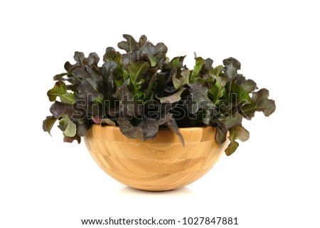 Red fresh lettuce in wood bowl isolated on white