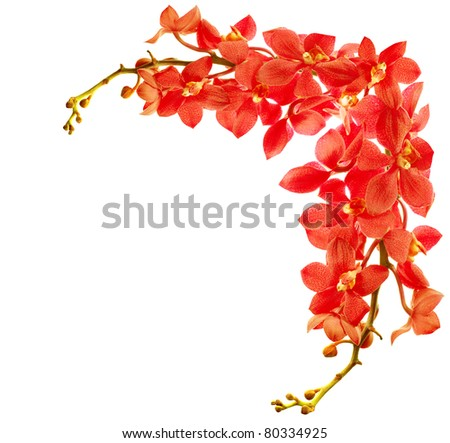 Red fresh orchid flower border isolated on white background - stock photo