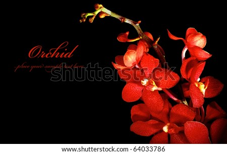 Red fresh orchid flower isolated on black background - stock photo