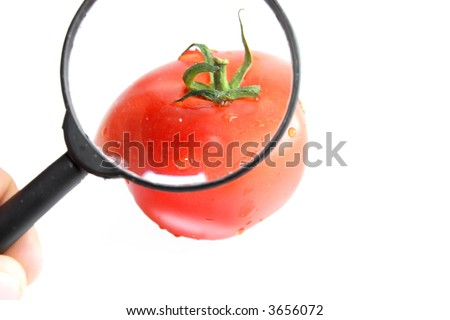 Red fresh tomato close up - isolated - stock photo
