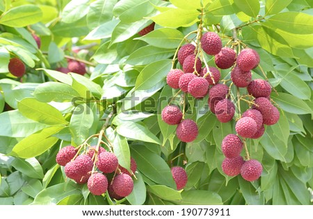 red fruit - stock photo