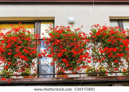 Red geranium flowers in pots on balcony of a family house