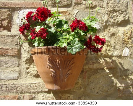 red geranium in pot on wall in Tuscany - stock photo