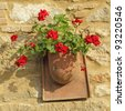 red geranium in rustic pot on stone wall, Tuscany, Italy, Europe - stock photo