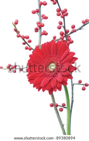 red gerber daisy and winter berries isolated on white background