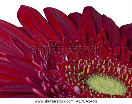 red gerbera close-up , white background - stock photo