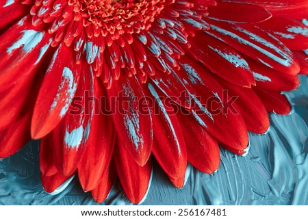 Red gerbera flower in blue paint - stock photo