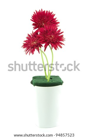 red gerbera flower in white jar