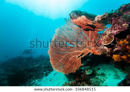 red giant sea fan