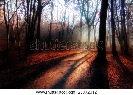 red glow forest - stock photo