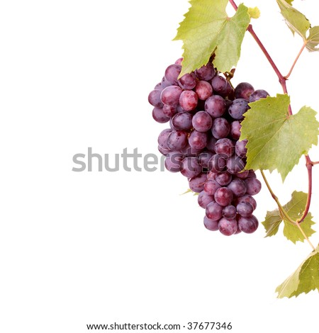 Red grape cluster with leaves isolated - stock photo