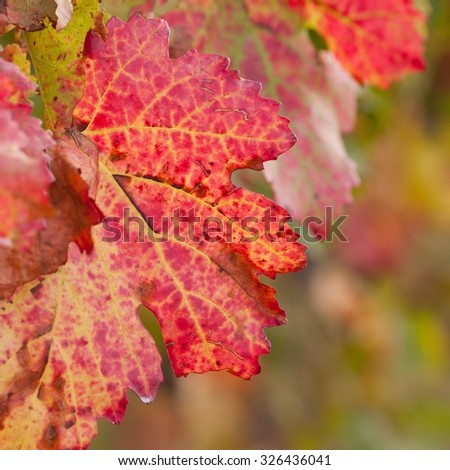 red grape leaf