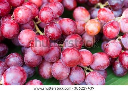Red Grape , Vitis vinifera L. , VITACEAE , Cardinal Grape , Emperor Grape - stock photo