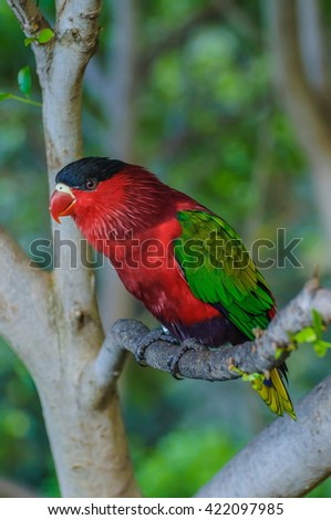 Red green bright parrot in Puerto de la Cruz, Santa Cruz de Tenerife,Tenerife, Canarian Islands.