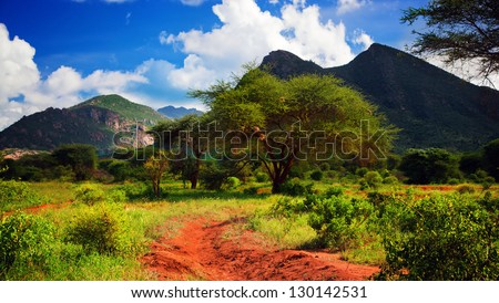 Red ground road and bush with savanna panorama landscape in Africa. Tsavo West, Kenya. - stock photo