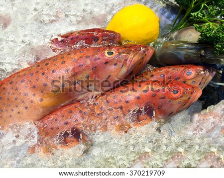 Red grouper fish on ice in the market - stock photo