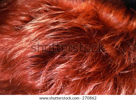 Red hair - stock photo