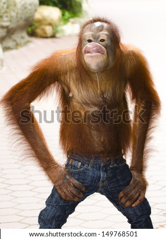 red hair chimpanzee kidding and acting like human - stock photo
