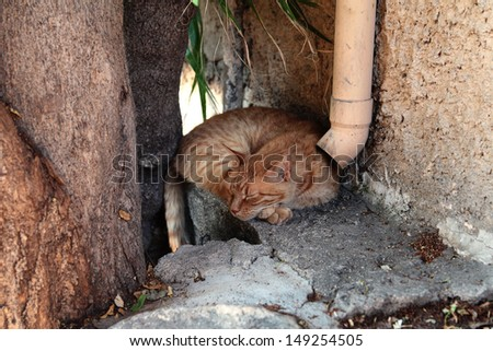 Red haired cat sleeping on the streets of Greece, Athens - stock photo