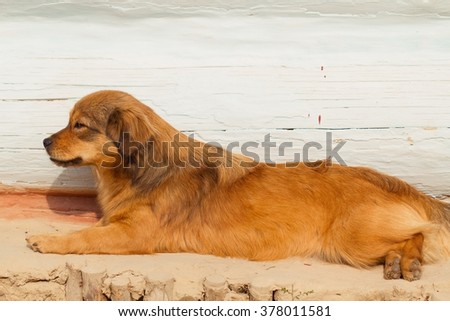 Red-haired dog lying near the house - stock photo