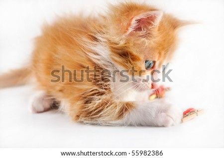 red-haired kitten playing isolated on white background